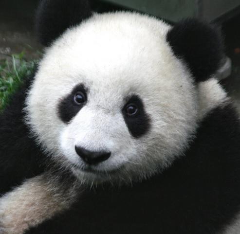 Google Panda 4.0 : Searchmetrics évalue les premiers grands perdants et gagnants de la mise à jour aux US