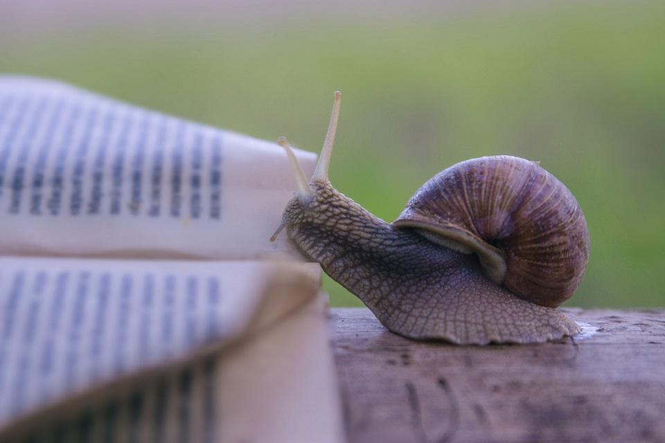 Une mémoire d'escargot et 7 pépites digitales
